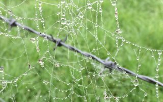 mmt cobwebs